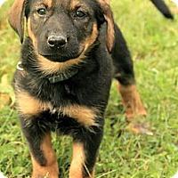 Adopt A Pet :: Jessie - Brattleboro, VT