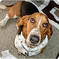 Adopt A Pet :: Clarke - Phoenix, AZ