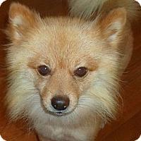 Adopt A Pet :: Brando - Brattleboro, VT