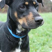 Adopt A Pet :: Skittles - Waldorf, MD