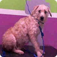 Adopt A Pet :: Melly - Fort Collins, CO