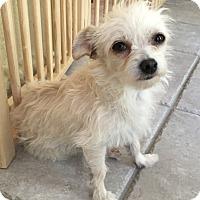 Adopt A Pet :: Pearl - San Diego, CA