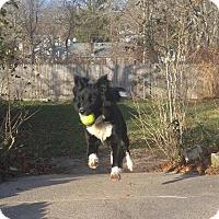 Adopt A Pet :: Foxy - Cuddebackville, NY
