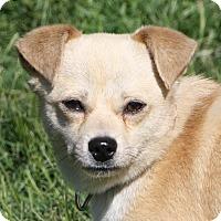 Adopt A Pet :: Gavin - Edmonton, AB