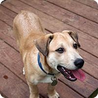 Adopt A Pet :: Niko - Huntsville, AL