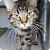 Adopt A Pet :: Kiki - Waupaca, WI