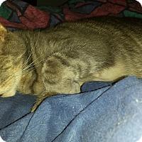 Adopt A Pet :: ReggieCP - Carlisle, PA