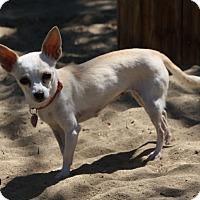 Adopt A Pet :: Mira - Edmonton, AB