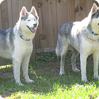 Adopt A Pet :: DENALI and KENAI - Orange Park, FL