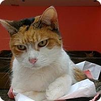 Adopt A Pet :: Anna - Hudson, NY