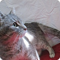 Adopt A Pet :: Envie - Lloydminster, AB