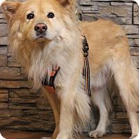 Adopt A Pet :: Noah - Waldorf, MD