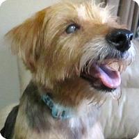 Adopt A Pet :: Kimmie in RI - Providence, RI
