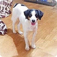 Adopt A Pet :: Sammy - Kingston, TN