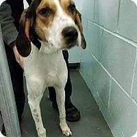 Adopt A Pet :: Lindsay - Stanton, MI