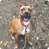 Adopt A Pet :: KYLA - NYC, NY