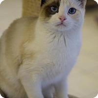 Adopt A Pet :: Nutmeg - DFW Metroplex, TX