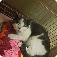 Adopt A Pet :: Victor - Medina, OH
