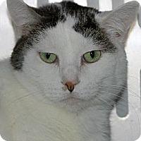 Adopt A Pet :: Olivia - Eldora, IA