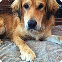Adopt A Pet :: AWESOME Caden - Hagerstown, MD