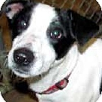 Adopt A Pet :: Foster - Rhinebeck, NY