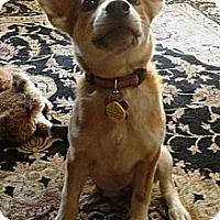 Adopt A Pet :: Tiki - Phoenix, AZ