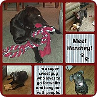 Adopt A Pet :: Hershey - Oak Creek, WI