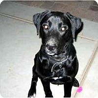 Adopt A Pet :: Panzer - Scottsdale, AZ