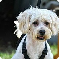 Adopt A Pet :: Devlin - Austin, TX