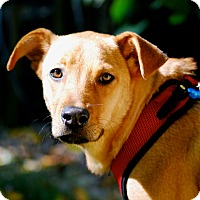 Adopt A Pet :: Santini - Randolph, NJ