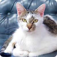 Adopt A Pet :: Betsy - Marietta, GA