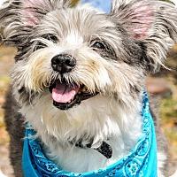 Adopt A Pet :: Stefano - Gainesville, FL