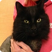 Adopt A Pet :: Victor - McHenry, IL