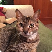 Adopt A Pet :: Luisa (LE) - Little Falls, NJ