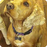 Adopt A Pet :: Tobie - Sacramento, CA