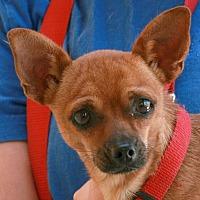 Adopt A Pet :: Romeo - Palmdale, CA