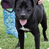 Adopt A Pet :: Harvey - Choudrant, LA