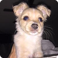 Adopt A Pet :: Dudley - Ogden, UT