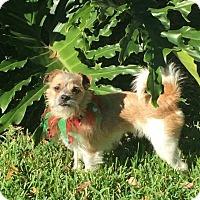 Adopt A Pet :: PIP - look at that face! - Terra Ceia, FL