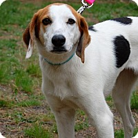Hound (Unknown Type) Dog for adoption in Cherry Hill, New Jersey - Gracie