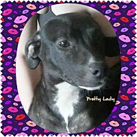 Adopt A Pet :: Pretty Lady - Locust, NC