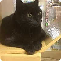 Adopt A Pet :: Smokey - Worcester, MA