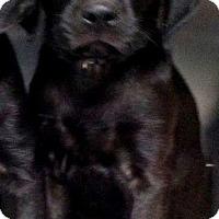 Adopt A Pet :: Browser - Barnegat, NJ
