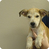 Adopt A Pet :: Dillon - Oviedo, FL