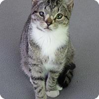 Adopt A Pet :: Yodi - Burlington, WA