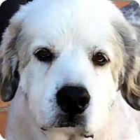 Adopt A Pet :: NORA (video) - Los Angeles, CA