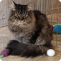 Adopt A Pet :: Samy - Irwin, PA