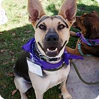 Adopt A Pet :: Gem - Adopted! - San Diego, CA