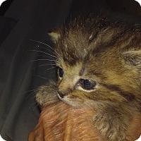 Adopt A Pet :: Cuddley Jan - Columbus, OH