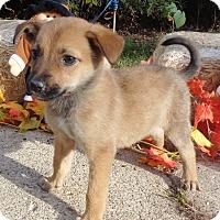 Adopt A Pet :: Javier - West Chicago, IL